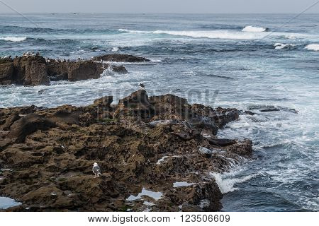 Seagulls resting on rock formations in the ocean in La Jolla, California.