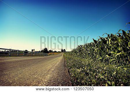 Road through a corn field in summer