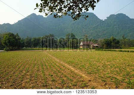 House, Mountain, Quang Binh, Viet Nam, Vietnam