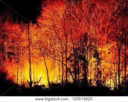 Danger fire Burning  forest tree at Night.