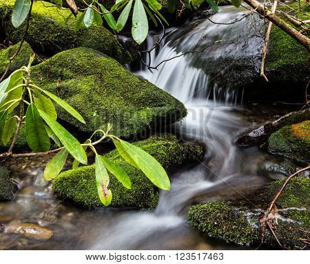 Spring In The Great Smoky Mountains. Wild rhododendron flourish along a stream in the Great Smoky Mountains National Park in Gatlinburg, Tennessee.