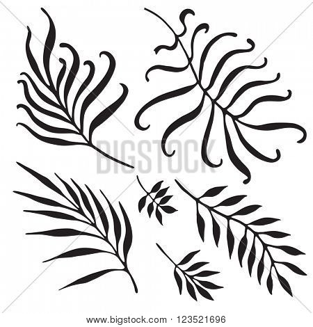 Palm Tree Branches Silhouette. Tropical Leaves and Twigs isolated on white background.