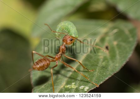 oreng ants attack wroms on a tree.