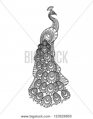 Hand drawn Peacock. Peacock line silhouette on white background. Vector illustration