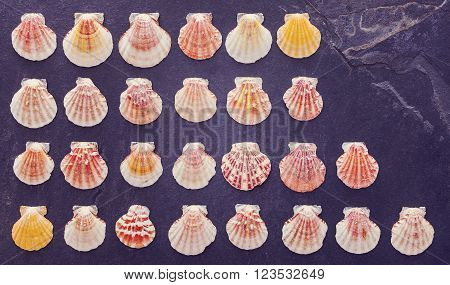 Vintage Stylized Colorful Shells On Dark Stone Background