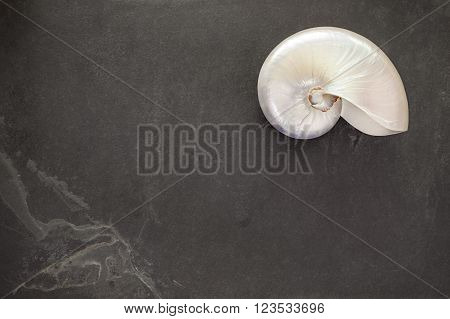 Pearl Shell Of A  Chambered Nautilus On Black Slate Background With Copy Space.