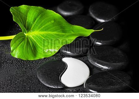 Beautiful Spa Still Life Of Yin-yang Stone Texture Symbol, Green Leaf With Dew And Black Zen Stones,