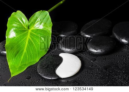 Beautiful Spa Background Of Yin-yang Stone Texture, Green Leaf With Dew And Black Zen Stones, Close