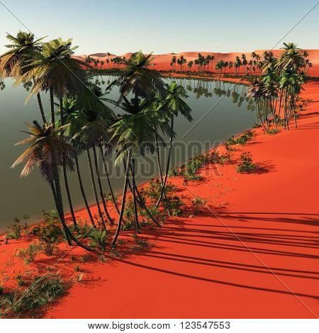 Palm trees near oasis