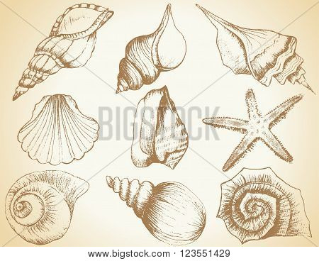 Hand drawn collection of various seashell illustrations isolated on vintage background