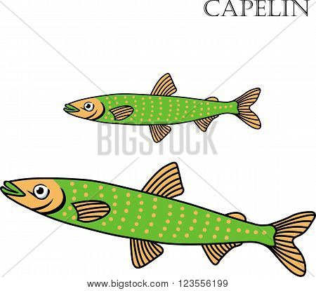 Capelin fish color cartoon vector illustration. Capelin fishes on white background. Capelin fish vector. Capelin fish illustration. Capelin fish isolated vector.
