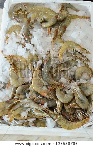 Freshly caught shrimps on ice ready for sale sea fish market Greece