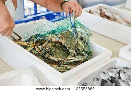Sea food market, freshly caught Blue crabs in a mesh bag ready for sale