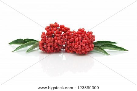 bunch of ripe elderberry on a white background with reflection closeup. horizontal photo.