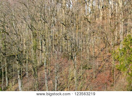 distant view of a with forest at early spring time in Southern Germany