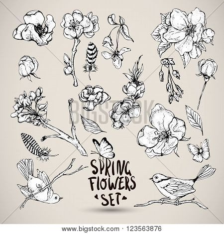 Set of Black and white Nature elements, sprigs separately leaves flower, pink blooming branches cherry, peach, pear, sakura, apple trees birds feathers and butterflies, Vector botanical illustration