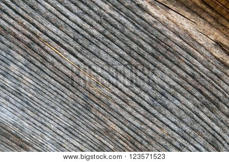 The texture of cut wood, a tree trunk. The wood background. Section of tree trunk. Nature for crafts and interior.