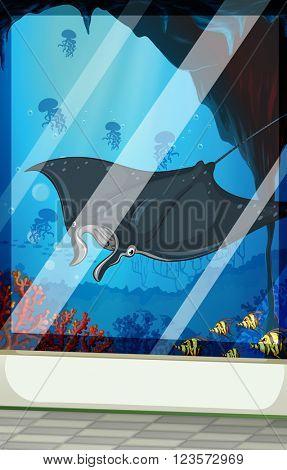 Stingray and fish at the aquarium illustration