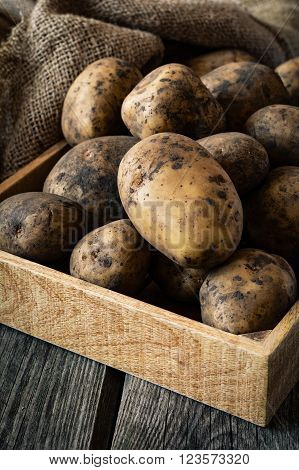 Raw potatoes in mud, harvest agriculture, vertical composition