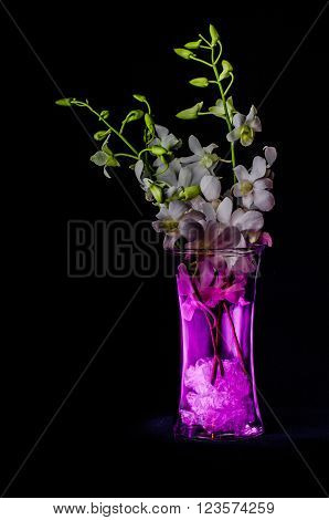 Lightpainting of a small white orchid in a pink glass vase