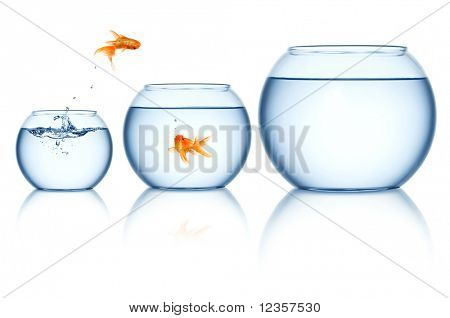 Goldfish jumping out of the fishbowl