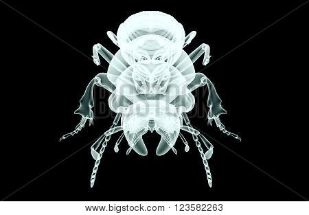 Xray Image Of An Insect Isolated On Black With Clipping Path, 3D Illustration
