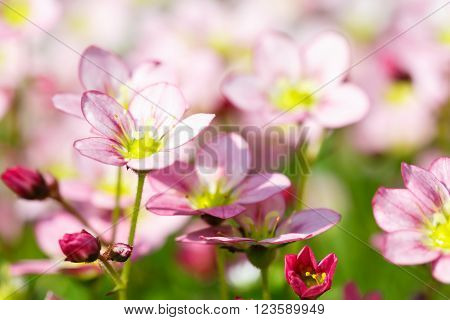 Beautiful spring flowers,floral background,macro photography,small depth of field ** Note: Soft Focus at 100%, best at smaller sizes