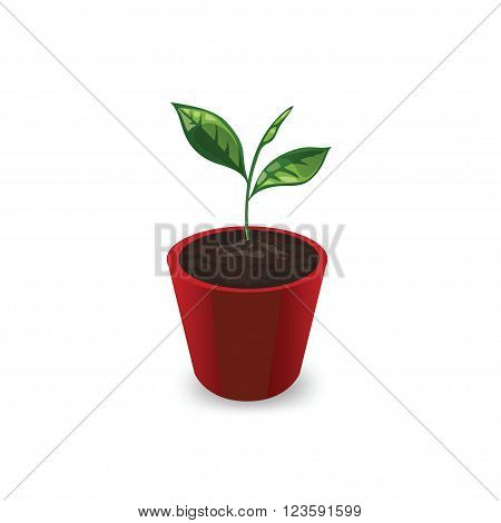 Icon plants in the pot isolated on white background. Icon young sprout with leaves in a red pot. Seedling in a pot in a cartoon style. Vector illustration.