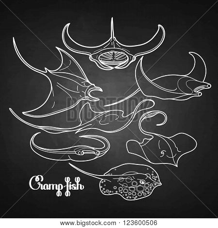 Graphic cramp fish collection drawn in line art style. Vector electric Manta ray isolated on chalkboard. Sea and ocean creatures in black and white colors
