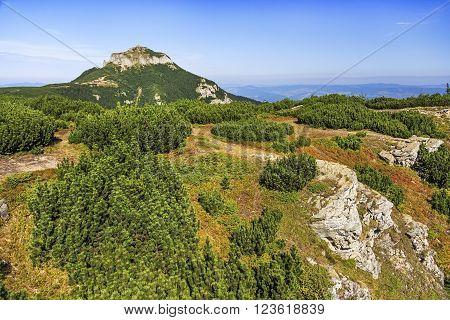 Summer mountain peak over dwarf pine trees