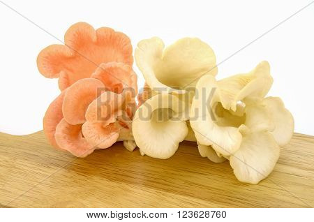 Organic Pleurotus djamor or pink oyster mushroom on white background. ** Note: Soft Focus at 100%, best at smaller sizes