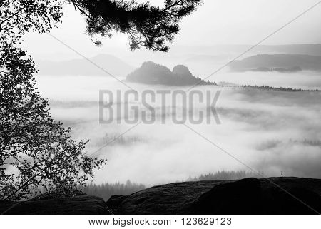 View through branches to deep misty valley within daybreak. Foggy and misty morning on the sandstone view point in national park