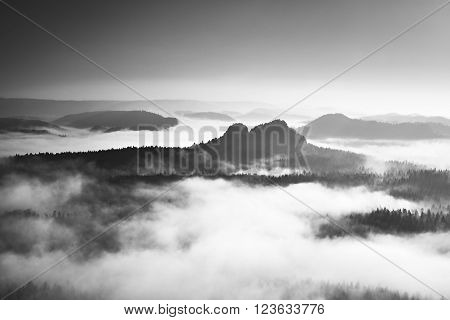 Famous spring weather in nauture within inversion. Treetops increased from creamy fog.Black and white photo