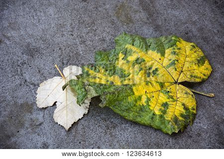 Photo of a leaves on the ground with green colour, yellow colour and sunlight