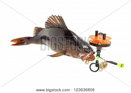 The caught fish on bait on a white background