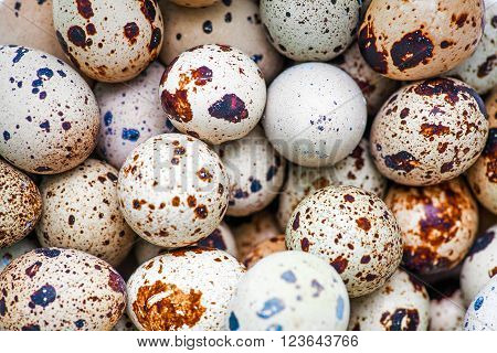 Quail eggs. Fresh quail eggs on a farmers market from above shot. Selective focus.