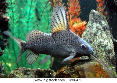a cat fish in a fish aquarium