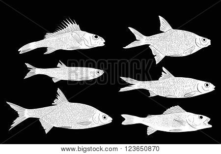 illustration with set of six freshwater fishes isolated on black background