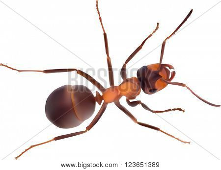 illustration with color ant isolated on white background