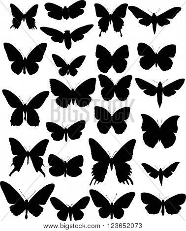 illustration with butterfly silhouettes collection isolated on white background
