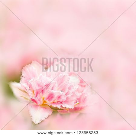 Beautiful spring background. Tender pink tulip on blurred background watercolor style