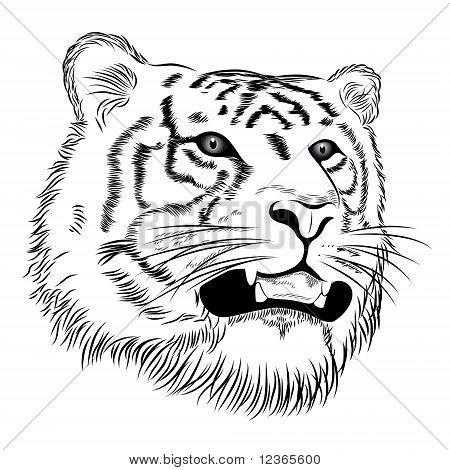 Vector Tiger, tattoo