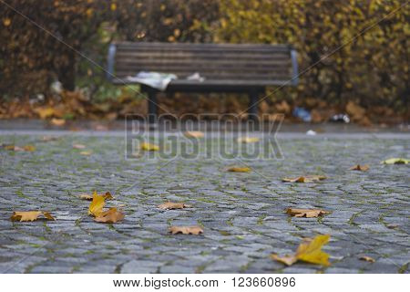 Autumn leaves with wooden park bench in background