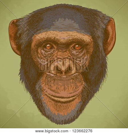 Vector engraving illustration of highly detailed hand drawn head of the chimpanzee in retro style