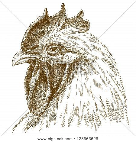 Vector antique engraving illustration of rooster head isolated on white background