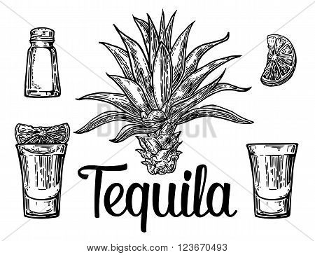 Glass and botlle of tequila. Cactus salt and lime Hand drawn sketch set of alcoholic cocktails. Vector illustration