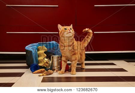 Red cat near full inverted garbage basket on kitchen floor