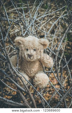 teddy bear out on an adventure in nature