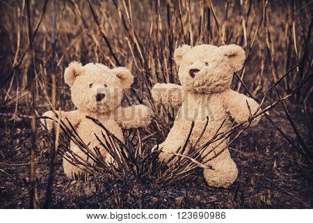Teddy bear on an adventure, selective focus