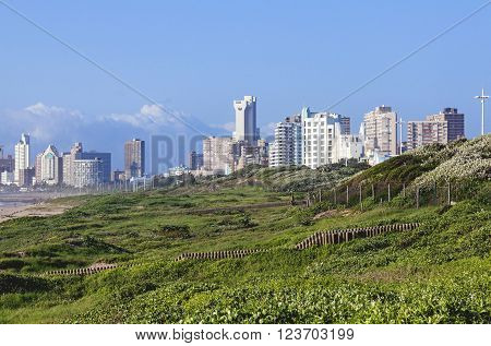 DURBAN SOUTH AFRICA - MARCH 23 2016: Landscape view of dune vegetation on beach against Durban city skyline in South Africa